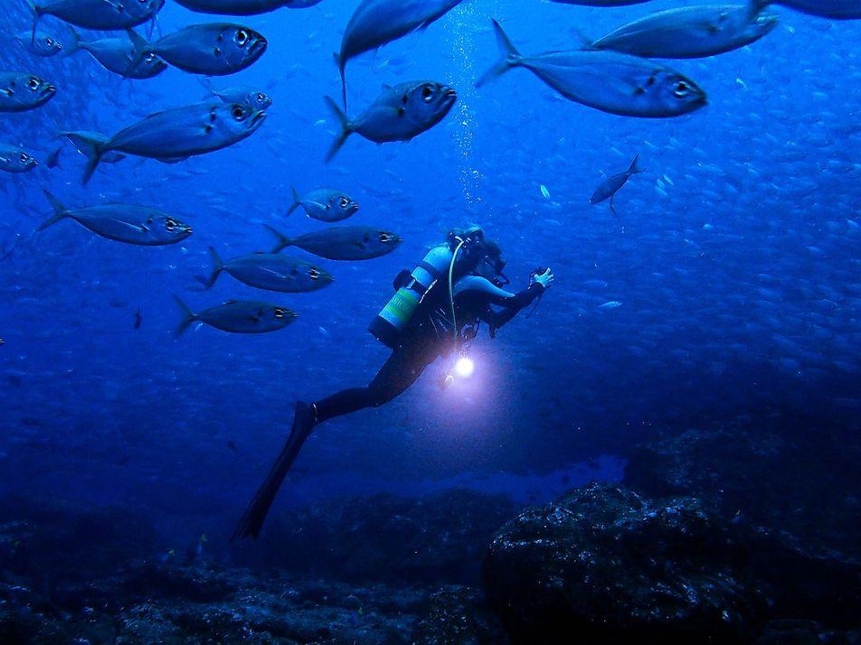 Rencontre avec Sylvia Earle et Jessica Cramp, protectrices des océans