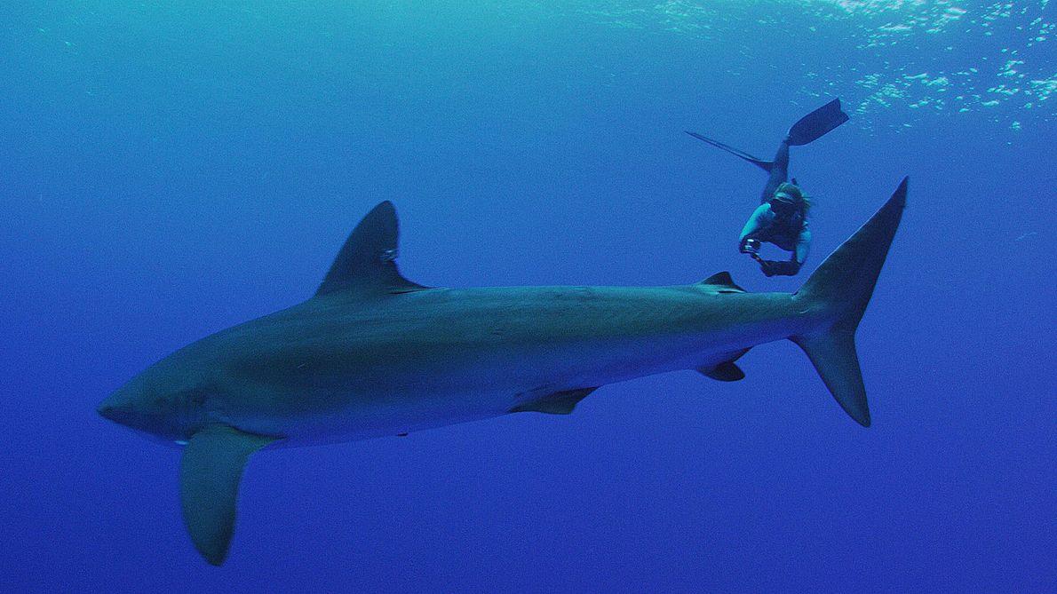 Après s'être battue pour créer l'un des plus grands sanctuaires de requins au monde, Jessica Cramp ...