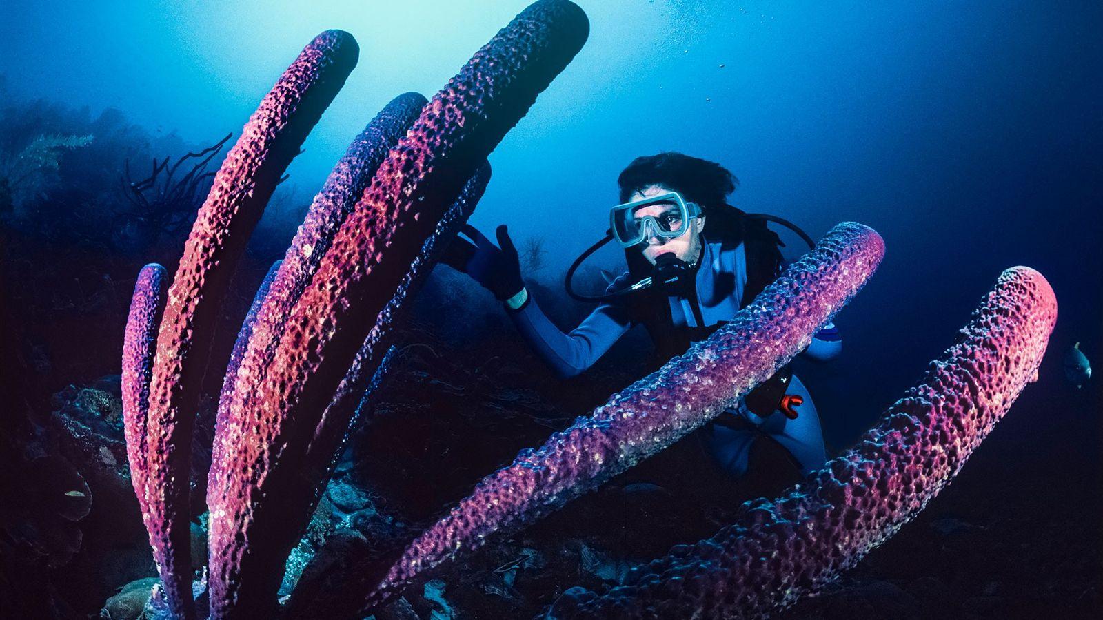 Sylvia Earle observe une immense éponge tubulaire dans les eaux de Bonaire.