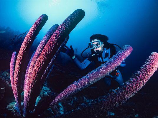 Entretien avec Sylvia Earle, pionnière de la protection des fonds marins