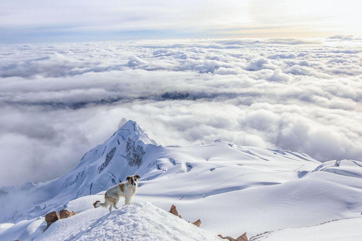 J'ai atteint le sommet du mont Huayna Potosi, en Bolivie, et j'ai été surpris de voir ...