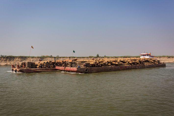 Une barge transporte des grumes de teck le long du fleuve Irrawaddy. Les autorités ont interdit ...