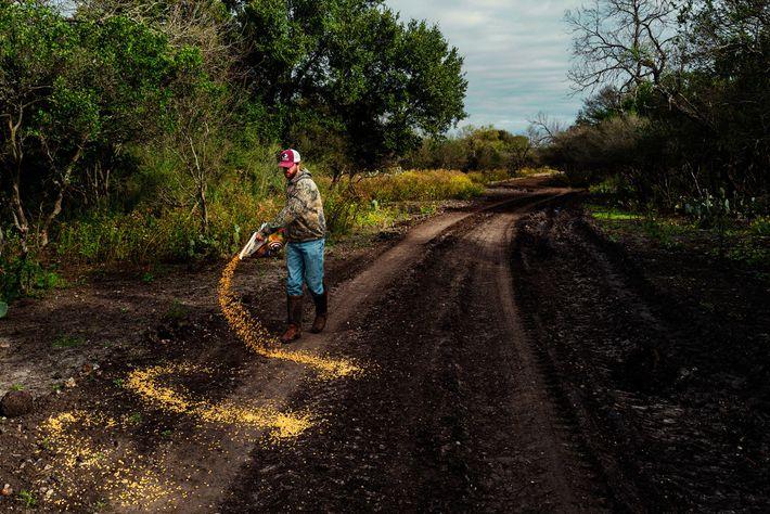 Guide du 777 Ranch, Kade McGuffin répand du maïs au sol afin d'attirer les cerfs axis pour ...