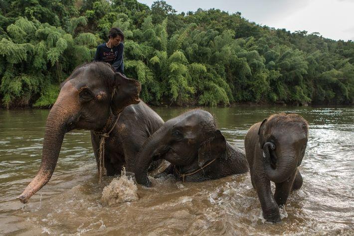 thailand-elephants-16