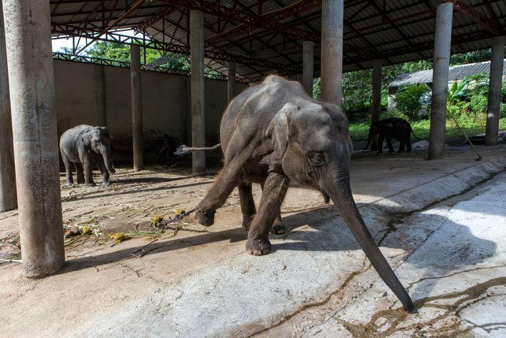 thailand-elephants-33