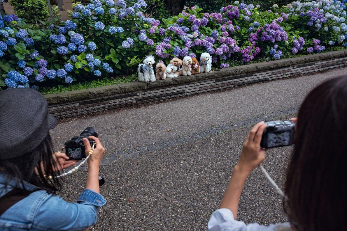 Cette image de passants qui alignent leurs chiens pour les prendre en photo dans le Ueno ...