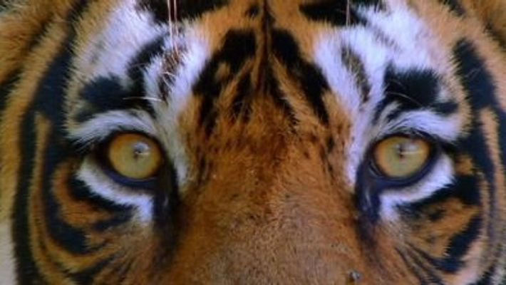 Inde sanctuaire animal