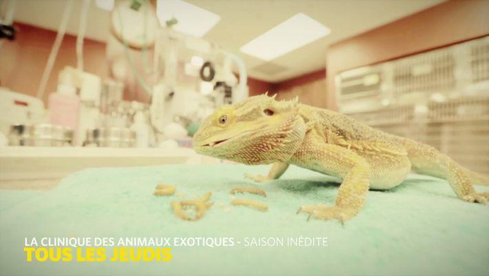 La clinique des animaux exotiques - Saison 2