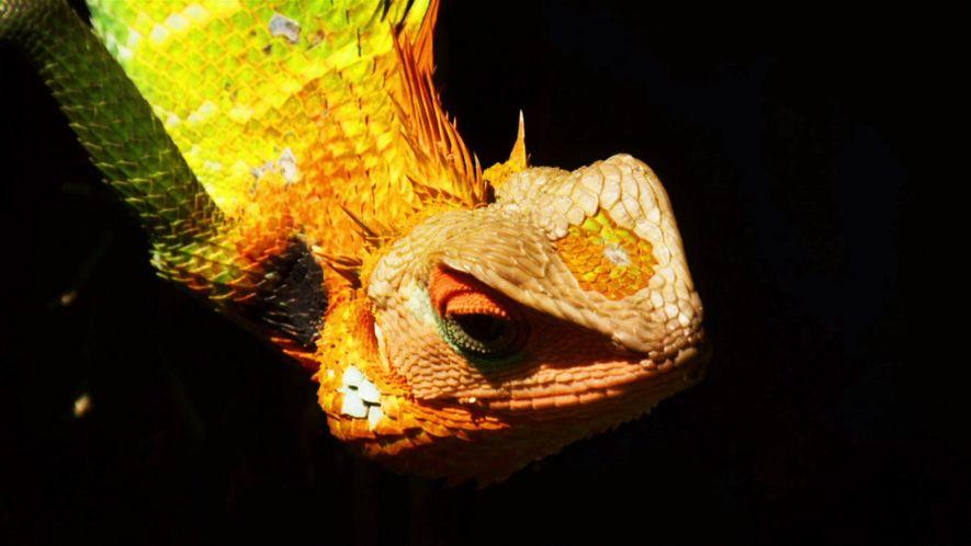 Nat Geo Wild, la chaîne des plus beaux documentaires animaliers