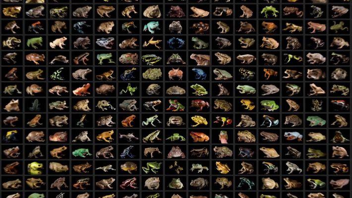 L'arche des espèces disparues - Bande Annonce