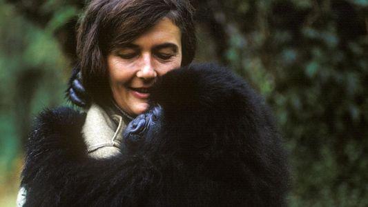 Dian Fossey : mystère dans la brume