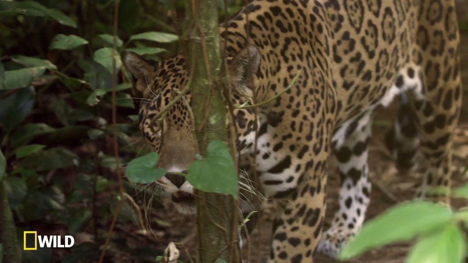 Destination Wild : Mexique