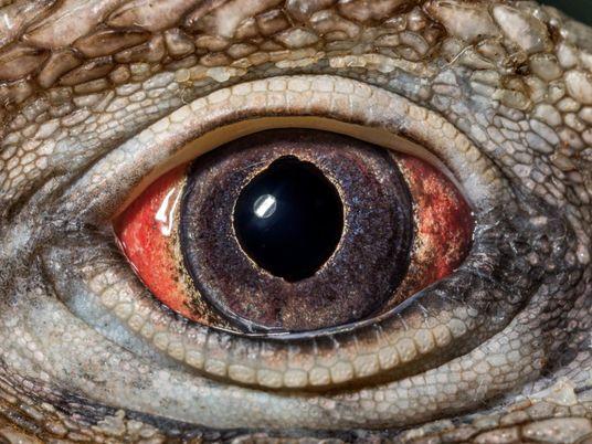 L'œil, plus belle création de la nature