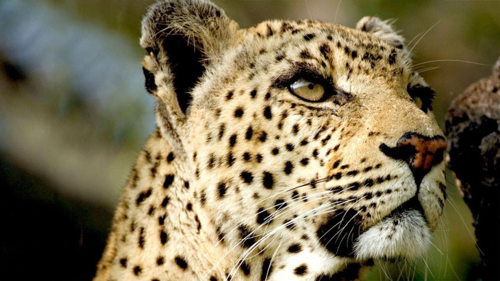 Monde animal : 10 ans de bouleversements