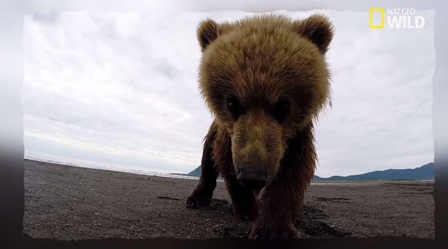 Un ourson joue avec une caméra