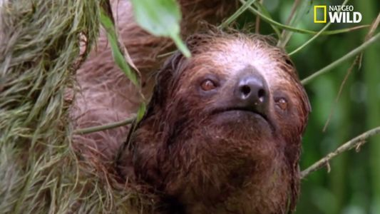 Les paresseux sont des experts en camouflage