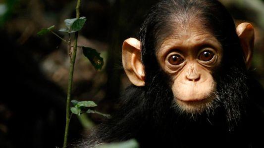 Il y a très peu de différences entre un bébé humain et un bébé singe