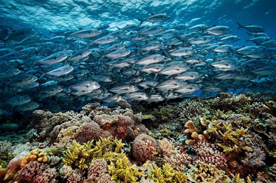Superbes images du récif corallien de Tubbataha