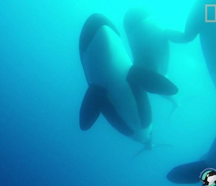 Nouveau type d'orque observé