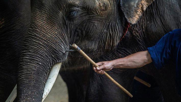Immersion dans l'univers cruel du tourisme animalier