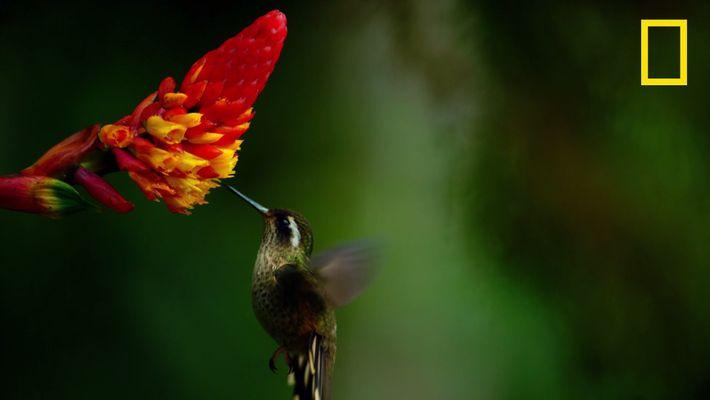 La lutte pour le nectar dans la jungle