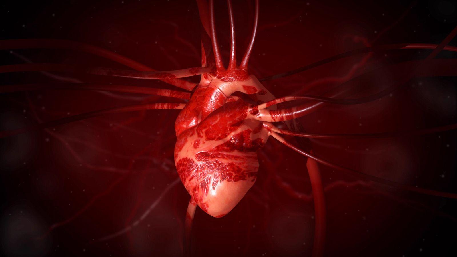 Le cœur, pièce maîtresse d'un réseau de plusieurs milliers de kilomètres