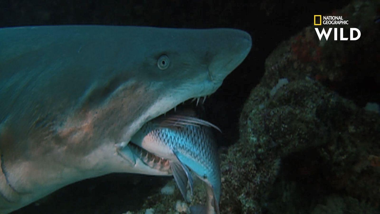 Les côtes africaines : royaume mortel des requins