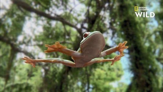 """Comment cette grenouille fait-elle pour """"planer"""" ?"""