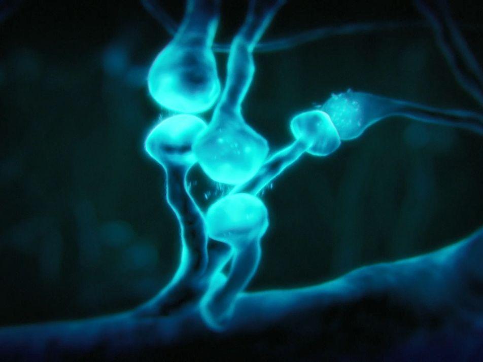 Les neurones, matériau de base de la pensée