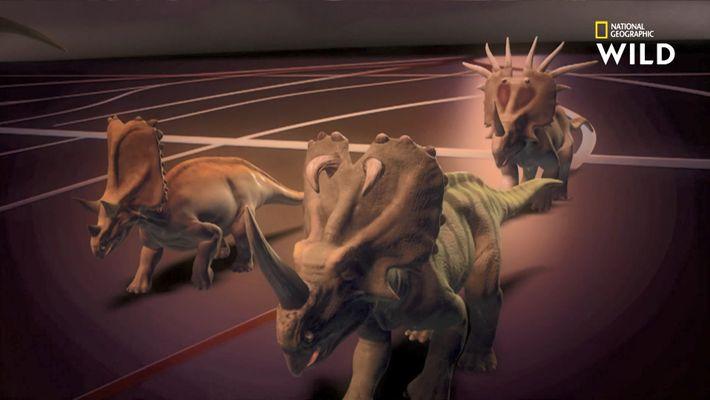 À quoi servaient les cornes du tricératops ?