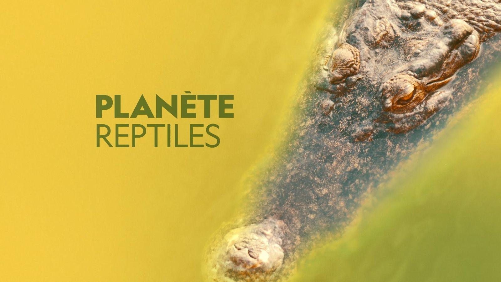Planète reptiles | Bande annonce