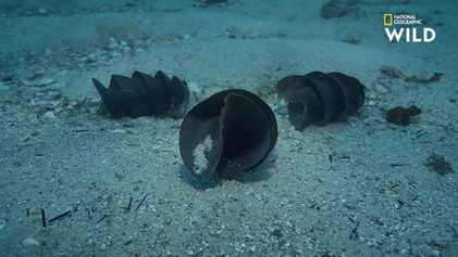 """La """"bourse de sirène"""", cet œuf de requin à la forme si particulière"""