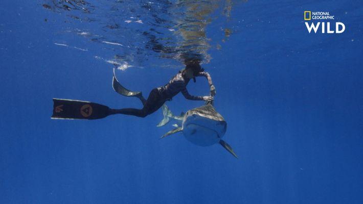 S'immiscer dans la vie secrète des requins, opération frissons