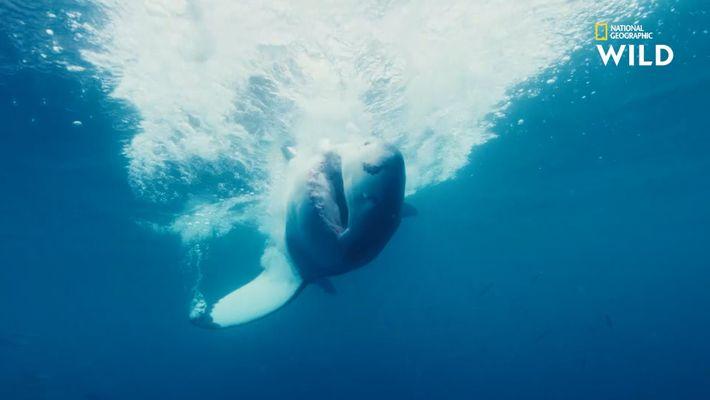 La Réunion, un paradis tropical assiégé par les requins