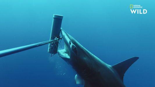 Les conséquences de l'activité humaine sur les populations de requins