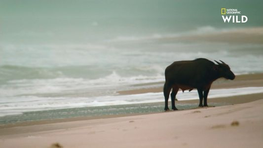 Le Gabon, symbole de l'Afrique sauvage