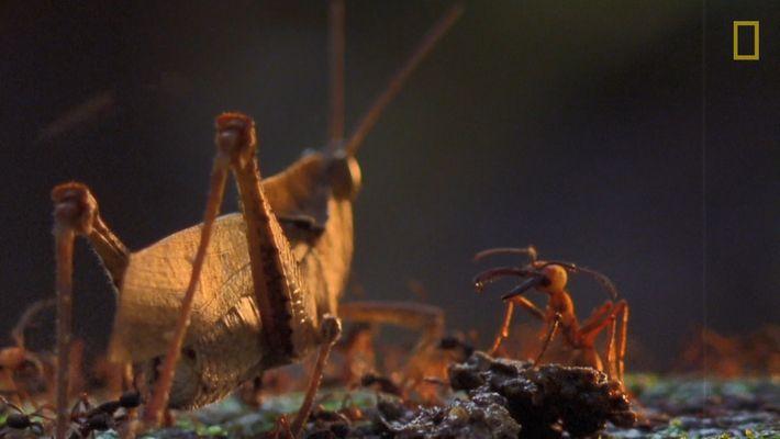 Cette armée de fourmis dévore tout sur son passage