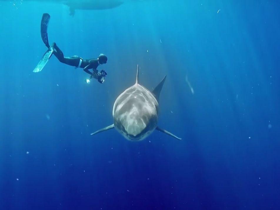 Des chercheurs ont réussi à filmer le plus grand requin blanc du monde