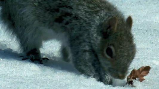 L'incroyable mémoire de l'écureuil