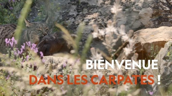 Europe, continent sauvage | Bande annonce