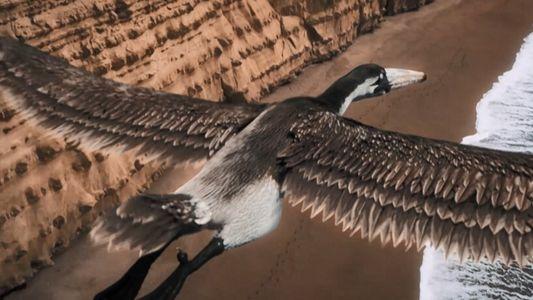 Pelagornis, l'immense oiseau préhistorique aux 7 mètres d'envergure