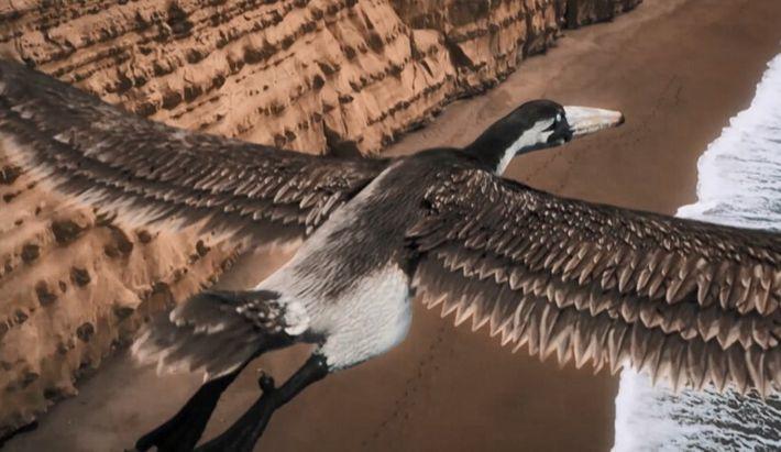 Pelagornis, l'oiseau à l'envergure d'un avion de chasse