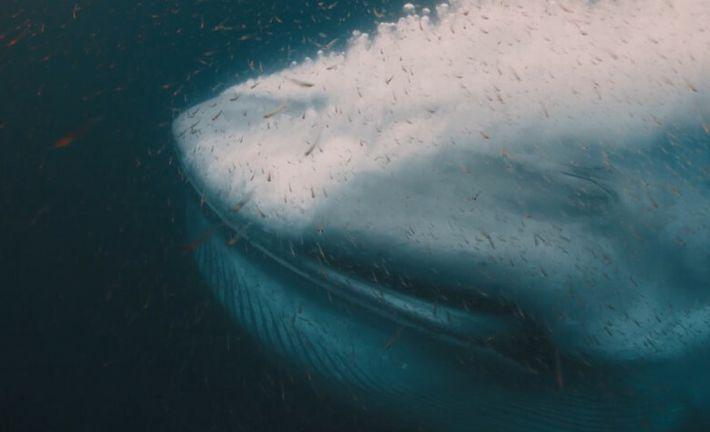 La majestueuse baleine bleue en images