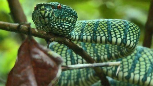 Le venin de serpents pourrait bien vous sauver la vie