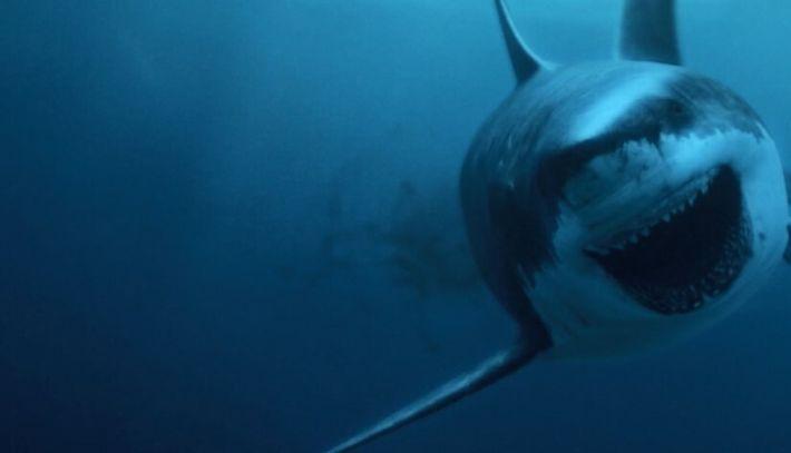 15 mètres de long : le mégalodon, monstre marin des temps anciens