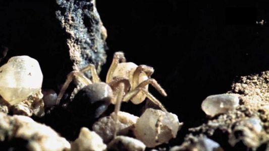 Les pièges élaborés de l'araignée corolle