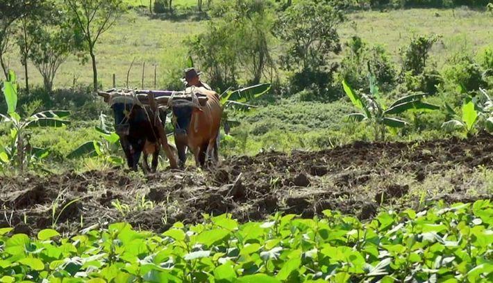 Pourquoi les agriculteurs sont moins touchés par la maladie de Crohn que les employés de bureau ...