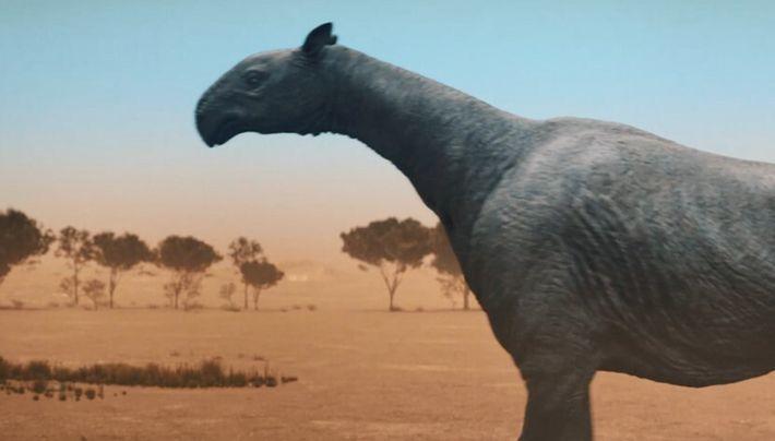 Ce que nous révèlent les rhinocéros, proches parents du paracératherium