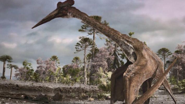 Les os du Quetzalcoatlus étaient creux, pourquoi ?