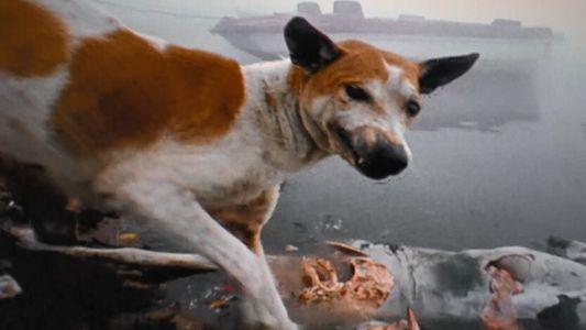 Pourquoi les chiens errants deviennent-ils incontrôlables ?